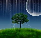 Nuit magique Photographie stock libre de droits