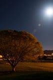 Nuits de parc photo libre de droits