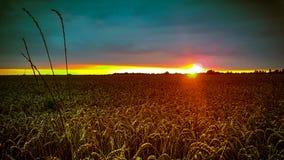 Nuits de récolte photographie stock