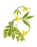 Numéro huit des branchements avec des lames et des fleurs Images libres de droits