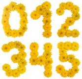 Numéros de fleur Photos libres de droits