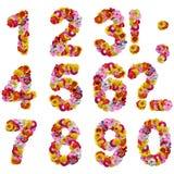 Numéros des fleurs Image libre de droits