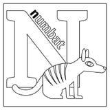Numbat, page de coloration de la lettre N illustration stock