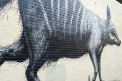 Numbat väggmålning, Fremantle, Australien Arkivfoton