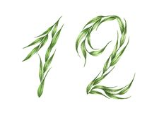 Number 12 with the green leaves texture. Eco symbol collection. Watercolor illustration. Number 12, alphabet of green leaves, Numbers from leaves isolated on stock illustration