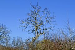 Number 119. Bare tree against the blue sky Stock Photos