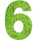Number 6 with fern texture, isolated on white background, font Helvetica World, bold royalty free stock image