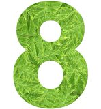 Number 8 with fern texture, isolated on white background, font Helvetica World, bold stock photos