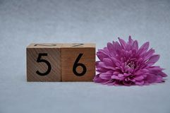 Number fifty six with a pink aster. On a white background stock image