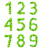 Number from flowers in green colour Stock Images