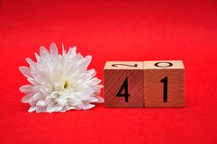 Number forty one with a white daisy. On a red background royalty free stock photos