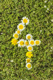 Number four from flower numbers Stock Image