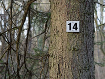 Number Fourteen on a Tree. A mark on a spruce at a hiking trail royalty free stock image