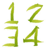Number green leaves fern isolated Stock Photo