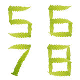 Number green leaves fern isolated Stock Photography