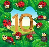 Number 10 with 10 ladybugs on leaves Stock Image