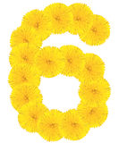 Number 6 made from dandelion flower. Isolated on white background royalty free stock photo
