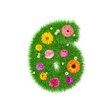 Number 6 made of grass and colorful flowers, spring concept for graphic design collage Stock Image