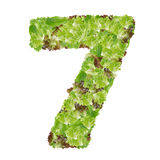 Number 7 made from hydroponics leaf vegetable Stock Photos