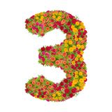 Number 3 made from Zinnias flowers. Isolated on white background.Colorful zinnia flower put together in number three shape with clipping path stock photography