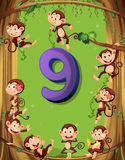 Number nine with 9 monkeys on the tree Royalty Free Stock Image