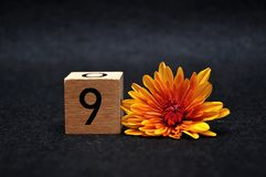 Number nine with an orange daisy. On a black background stock image