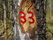 Number 33 on the notch on the birch. Bark Stock Image