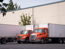 Orange middle semi trucks with box trailers stand in warehouse d. A number of orange middle-class rigs semi trucks for the transportation of commercial cargo for Stock Photos