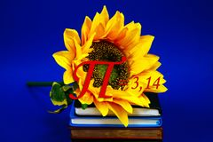 Number pi sun flower growing book diary notebook golden section mathematics physics coil figure count school day march brown. A large yellow sunflower close of Stock Photo