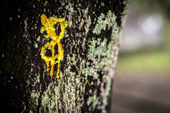Number 8 painted in a tree Royalty Free Stock Photos