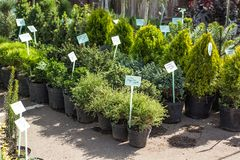 A number of plants in pots in the garden market royalty free stock image