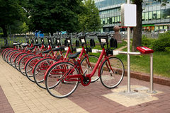 A number of red bicycles. On parking in park in the summer Royalty Free Stock Photo