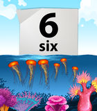 Number six and six jellyfish underwater Royalty Free Stock Images