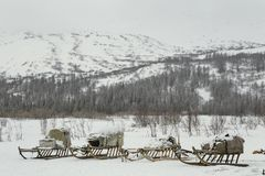 A number of sledges with a load of snowy mountains. The valley of the river Sob. Polar Urals. Russia stock image