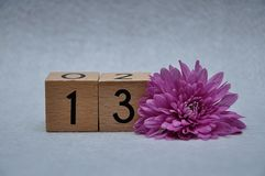 Number thirteen with a pink aster. On a white background royalty free stock photo