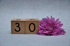 Number thirty with a pink aster. On a white background stock photos