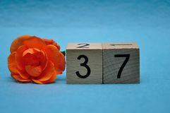 Number thirty seven with an orange rose royalty free stock image