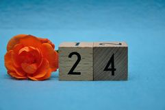 Number twenty four with an orange rose royalty free stock images