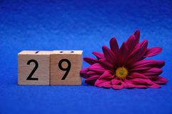 Number twenty nine with a purple daisy royalty free stock photography