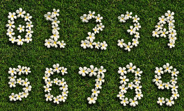 Number white tropical flowers on green grass. 1, 2 Stock Image
