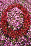 Number Zero made from Pink and Red Begonias Royalty Free Stock Photos