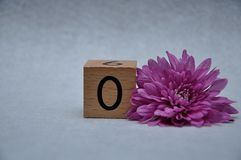 Number zero with a pink aster. On a white background royalty free stock photography