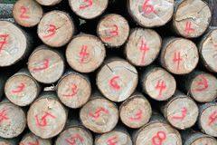 Numbered cut wood Royalty Free Stock Photos