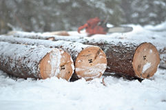Numbered tree trunks ready for export. Stock Image