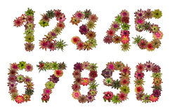 Numbers of bromeliad flowers Royalty Free Stock Photo