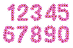 Numbers of cosmos flowers. Royalty Free Stock Image