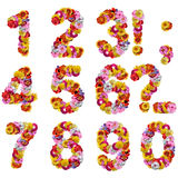 Numbers of flowers. Isolated on a white background royalty free stock image