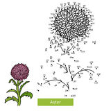 Numbers game, flower Aster Stock Images