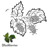 Numbers game: fruits and vegetables (blackberries) Stock Photos