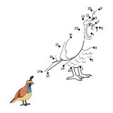 Numbers game (quail, bird) Royalty Free Stock Images